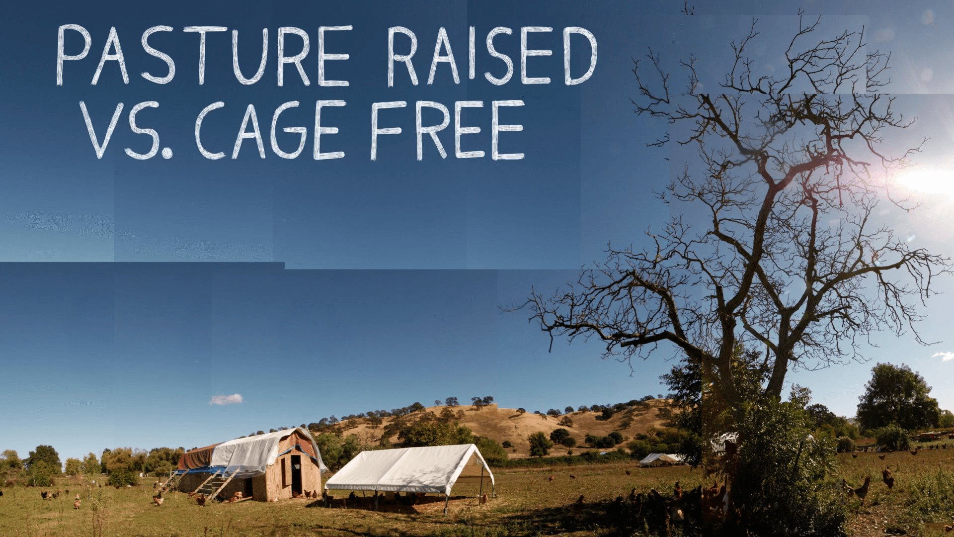 Is Cage Free Eggs healthier? According to research